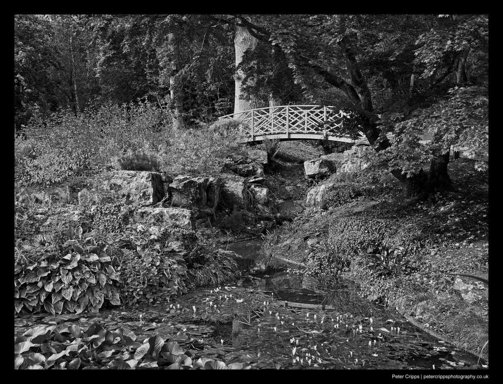Bridge Over Lily Pond