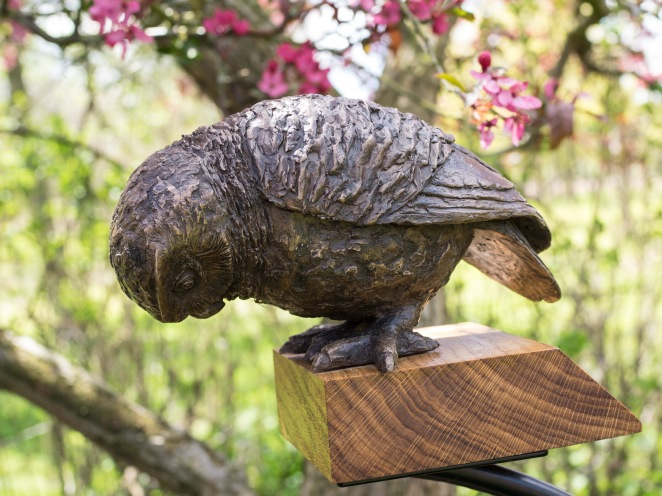Little Owl IV (I Spy) by Marie Shepherd