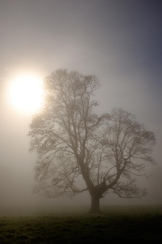 December - Tree in Mist