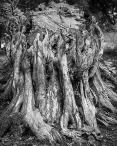 Alien Tree Stump