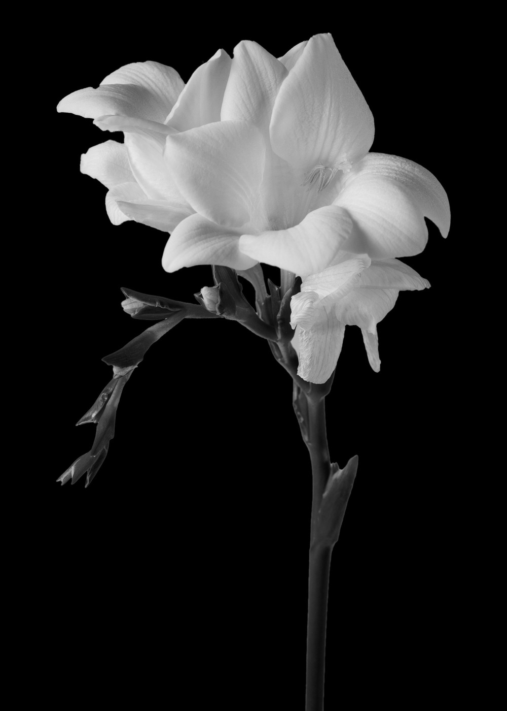 Homage to Mapplethorpe
