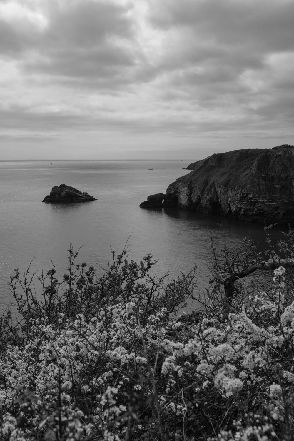 Berry Head Nature Reserve with ACROS Film Simulation