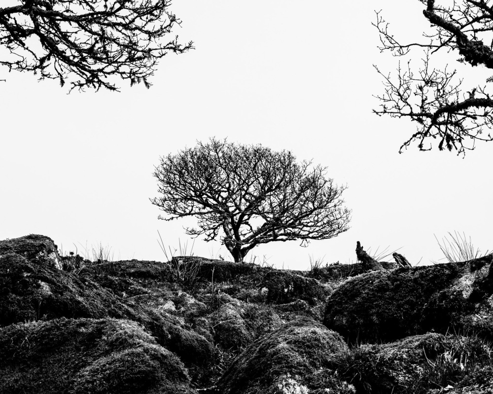 Wistman's Wood Dartmoor